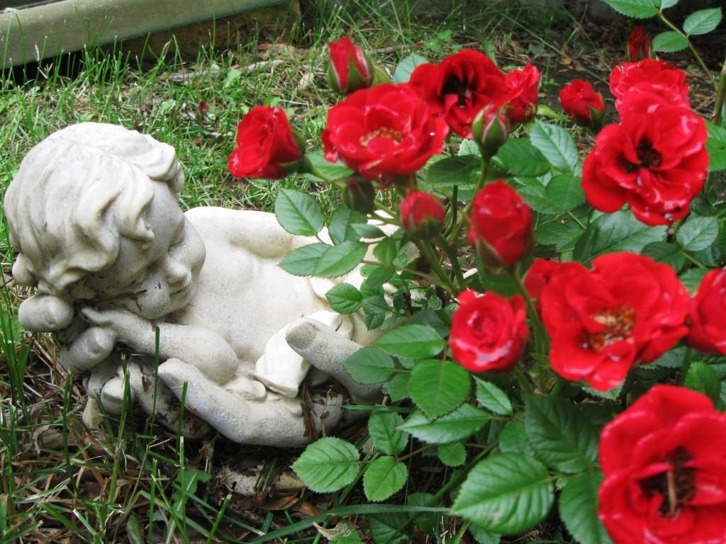 Emily's Rose Bush