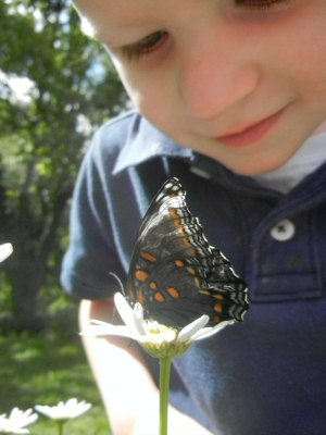 Micah observing a butterfly