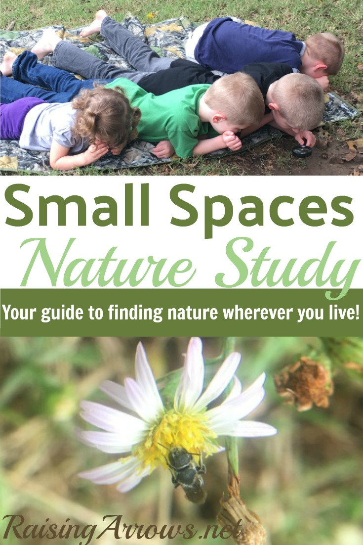 Live in the city? Don't have a lot of nature around? You can still do nature studies! Here's how!