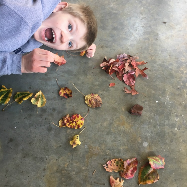 Leaf sorting project from this week's Large Family Homeschool Week in Review