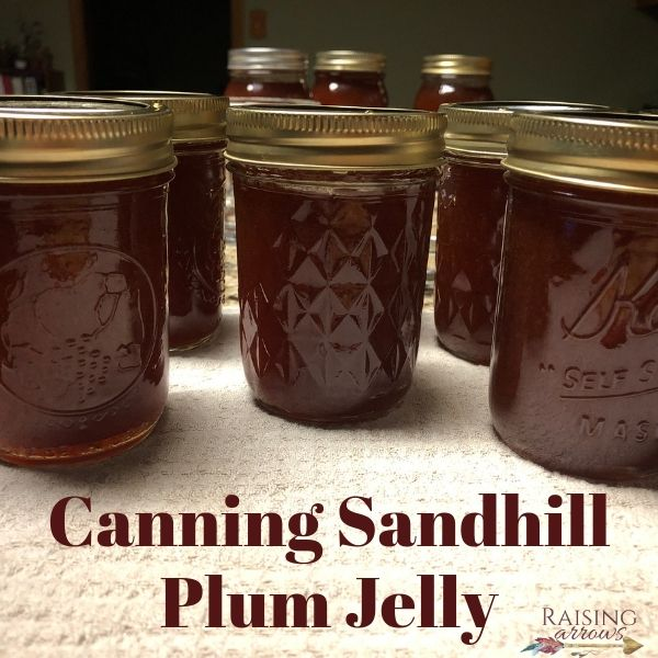 Sandhill plum jelly made from wild plums that grow along the roadside in the central United States.