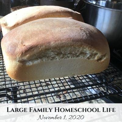 Large Family Homeschool Life 11/1/20